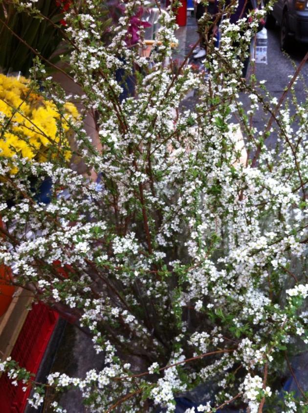 CNY White Flowers